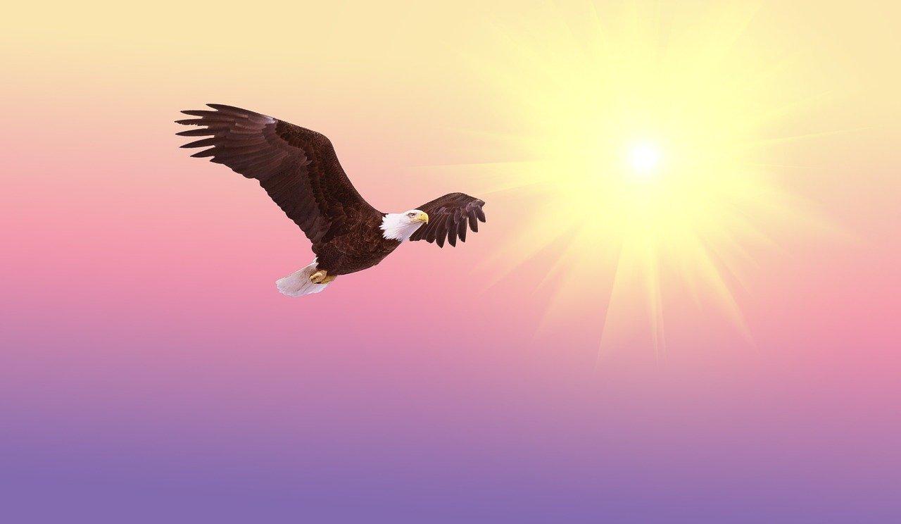 bald eagle, bird, flying